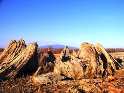 Pohľad na babiu horu cez kmeň stáročného stromu pri ceste